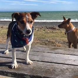 Jack & Dingo