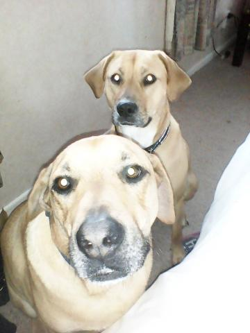 Sarg & Bella