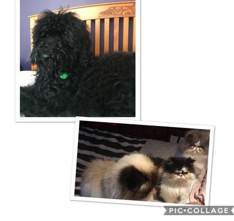 Baxter, Bailey, Sasha & Chubbs